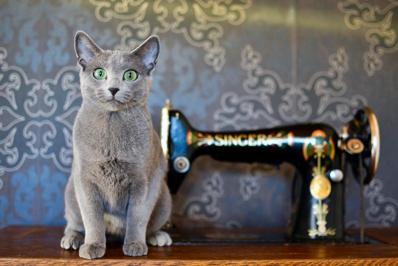 Soveltuuko Venäjänsininen kissa lapsiperheeseen?